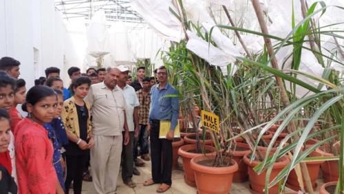 HSC Voc Visit to Vasant Data Research Institute- Indoor Sugarcane breeding